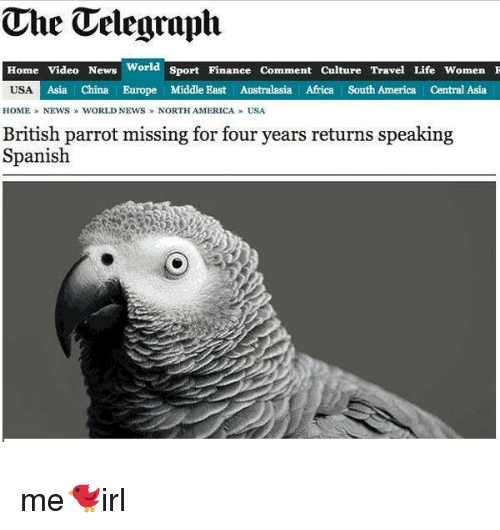 home video: The Telegraph  Home Video News  World  Sport Finanee Comment Culture Travel Life Women F  USA  Asia China Europe Middle East Australasia Africa South America Central Asia  HOME NEWS WORLD NEWS NORTH AMERICA USA  British parrot missing for four years returns speaking  Spanish me🐦irl