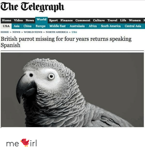 Africa, America, and Life: The Telegraph  Home Video News  World  Sport Finanee Comment Culture Travel Life Women F  USA  Asia China Europe Middle East Australasia Africa South America Central Asia  HOME NEWS WORLD NEWS NORTH AMERICA USA  British parrot missing for four years returns speaking  Spanish me🐦irl