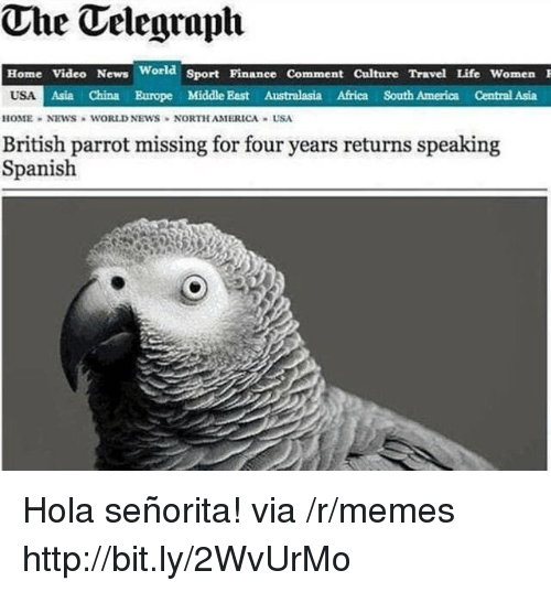 home video: The Telegraph  Home Video News World Sport Pinanee Comment Culture Travel Life Women  USA  Asia China Europe Middle East Australasia Africa South America Central Asia  HOME NEWS WORLD NEWS NORTH AMERICA USA  British parrot missing for four years returns speaking  Spanish Hola señorita! via /r/memes http://bit.ly/2WvUrMo