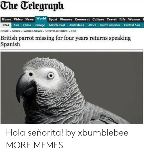 home video: The Telegraph  Home Video News World Sport Pinanee Comment Culture Travel Life Women  USA  Asia China Europe Middle East Australasia Africa South America Central Asia  HOME NEWS WORLD NEWS NORTH AMERICA USA  British parrot missing for four years returns speaking  Spanish Hola señorita! by xbumblebee MORE MEMES