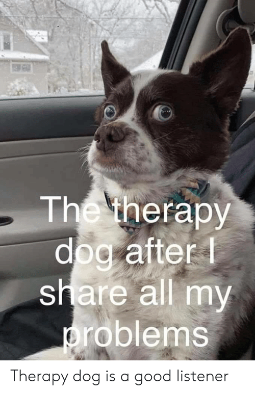 Good, Dog, and Listener: The therapy  dog after  share all my  roblems Therapy dog is a good listener