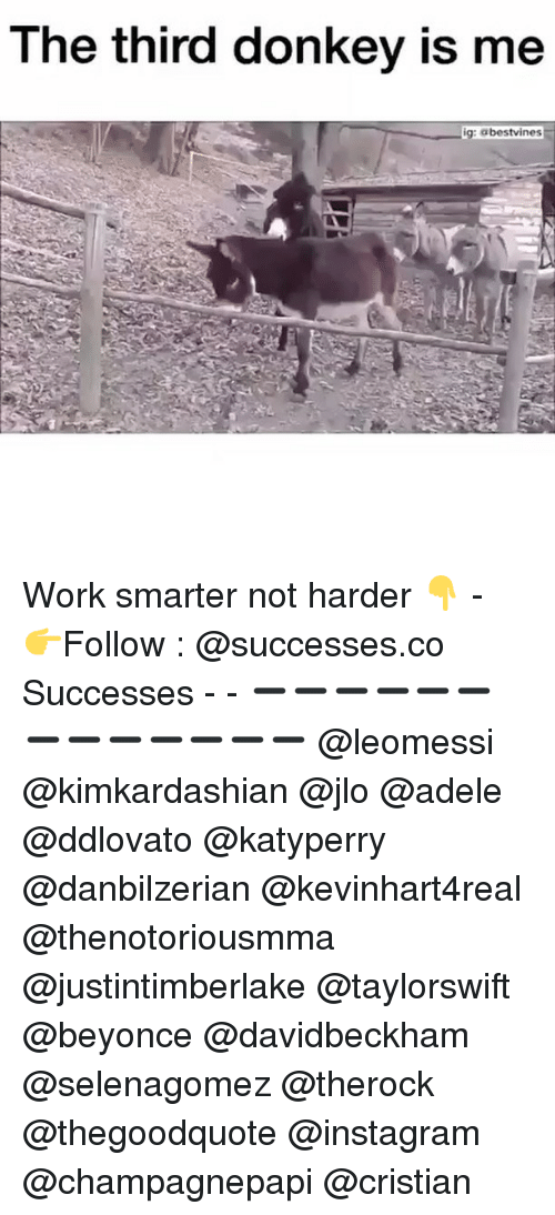 donkeys: The third donkey is me  ig: abestvines Work smarter not harder 👇 - 👉Follow : @successes.co Successes - - ➖➖➖➖➖➖➖➖➖➖➖➖➖ @leomessi @kimkardashian @jlo @adele @ddlovato @katyperry @danbilzerian @kevinhart4real @thenotoriousmma @justintimberlake @taylorswift @beyonce @davidbeckham @selenagomez @therock @thegoodquote @instagram @champagnepapi @cristian