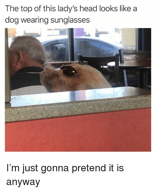 Funny, Head, and Sunglasses: The top of this lady's head looks like a  dog wearing sunglasses I'm just gonna pretend it is anyway