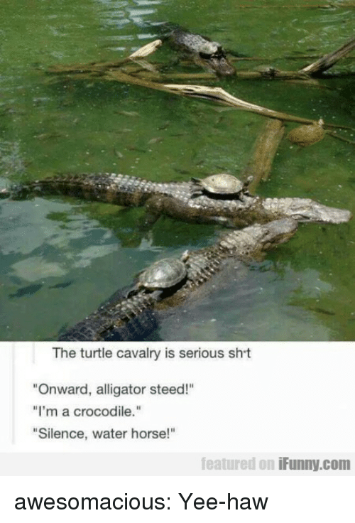 "Tumblr, Yee, and Alligator: The turtle cavalry is serious sht  ""Onward, alligator steed!""  ""I'm a crocodile.""  ""Silence, water horse!""  featured on iFunny.com awesomacious:  Yee-haw"