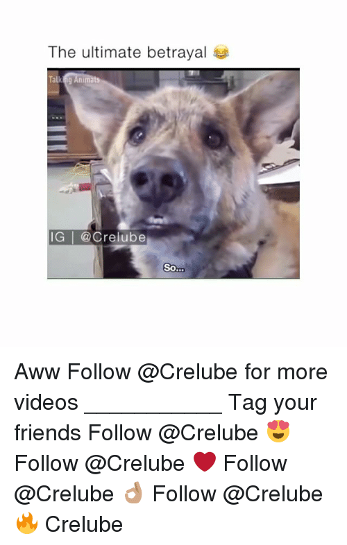 Awwing: The ultimate betrayal  IG | @Crelube  So Aww Follow @Crelube for more videos ___________ Tag your friends Follow @Crelube 😍 Follow @Crelube ❤ Follow @Crelube 👌🏽 Follow @Crelube 🔥 Crelube