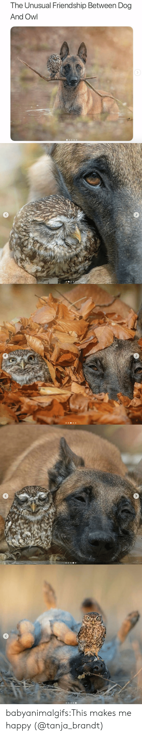Instagram, Target, and Tumblr: The Unusual Friendship Between Dog  And Owl babyanimalgifs:This makes me happy (@tanja_brandt)