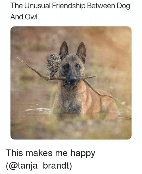 Funny, Happy, and Friendship: The Unusual Friendship Between Dog  And Owl This makes me happy (@tanja_brandt)