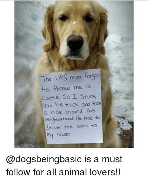 Memes, My House, and Ups: The UPS man forgot  o throw me a  Cookie So SncK  nto his truck and lock  a ride arand the  neigborhood. He had to  deliver me back to  my house. @dogsbeingbasic is a must follow for all animal lovers!!