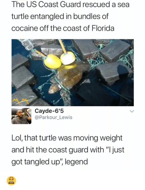 """Lol, Memes, and Cocaine: The US Coast Guard rescued a sea  turtle entangled in bundles of  cocaine off the coast of Florida  Cayde-6'5  @Parkour_Lewis  Lol, that turtle was moving weight  and hit the coast guard with """"Ijust  got tangled up"""" legend 😩"""
