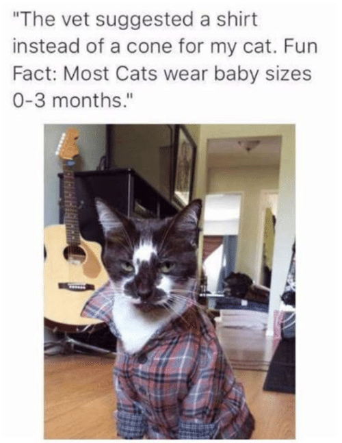 "Cats, Memes, and Baby: ""The vet suggested a shirt  instead of a cone for my cat. Fun  Fact: Most Cats wear baby sizes  0-3 months."""