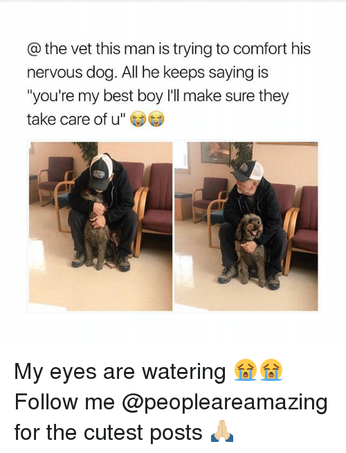 """Memes, Best, and Boy: @the vet this man is trying to comfort his  nervous dog. All he keeps saying is  """"you're my best boy I'll make sure they  take care of u"""" My eyes are watering 😭😭 Follow me @peopleareamazing for the cutest posts 🙏🏼"""
