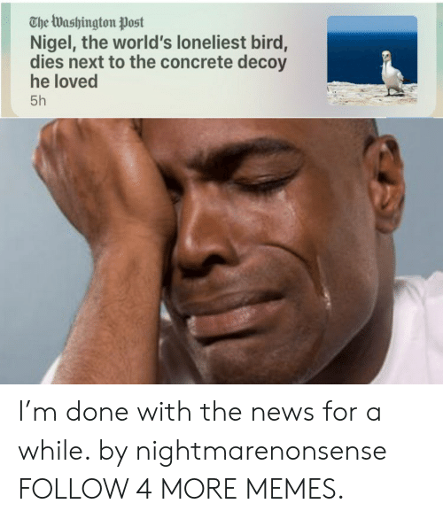Dank, Memes, and News: The Washington Post  Nigel, the world's loneliest bird,  dies next to the concrete decoy  he loved  5h I'm done with the news for a while. by nightmarenonsense FOLLOW 4 MORE MEMES.