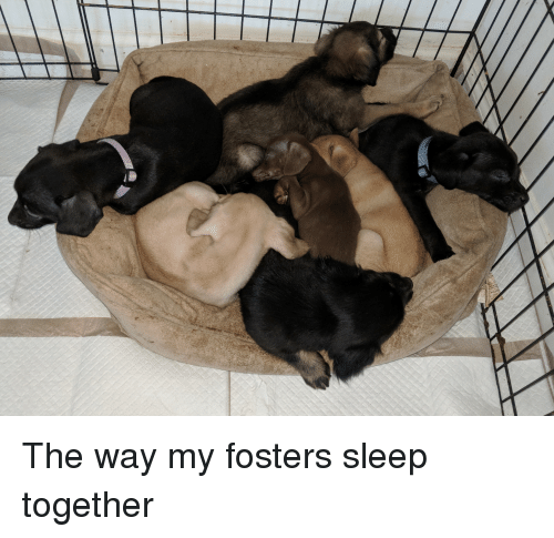 Sleep, Fosters, and Together: The way my fosters sleep together