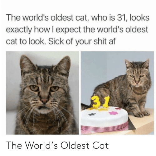 cat: The World's Oldest Cat