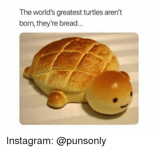Instagram, Bread, and Turtles: The world's greatest turtles aren't  born, they're bread Instagram: @punsonly