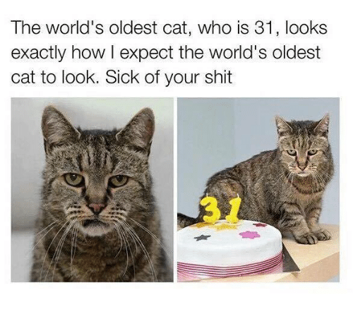 Memes, 🤖, and Expectedly: The world's oldest cat, who is 31, looks  exactly how l expect the world's oldest  cat to look. Sick of your shit