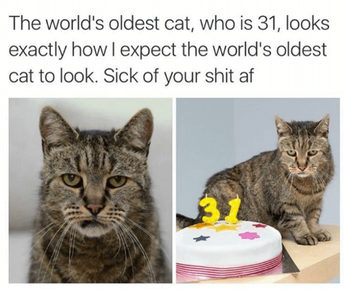 Af, Memes, and Shit: The world's oldest cat, who is 31, looks  exactly how l expect the world's oldest  cat to look. Sick of your shit af