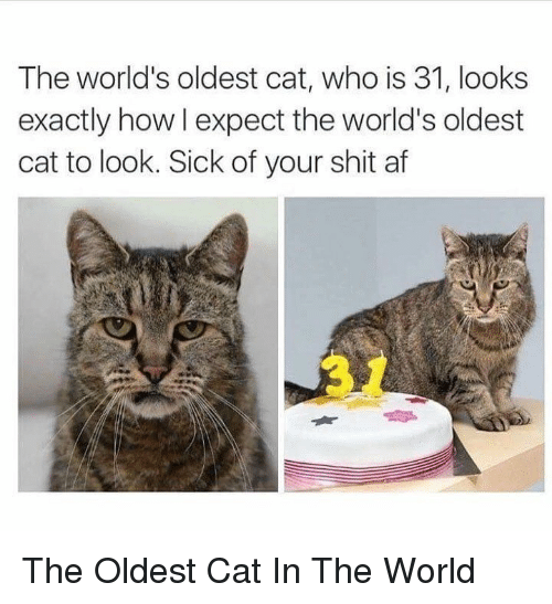 Af, Shit, and World: The world's oldest cat, who is 31, looks  exactly how I expect the world's oldest  cat to look. Sick of your shit af The Oldest Cat In The World