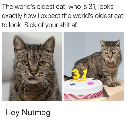 Cats, Memes, and Sick: The world's oldest cat, who is 31, looks  exactly how I expect the world's oldest cat  to look. Sick of your shit af. Hey Nutmeg