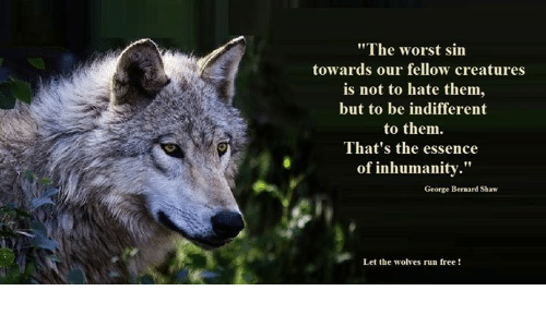 "Memes, Run, and The Worst: ""The worst sin  towards our fellow creatures  is not to hate them,  but to be indifferent  to them.  That's the essence  of inhumanity.""  George Bernard Shaw  Let the wolves run free  !"