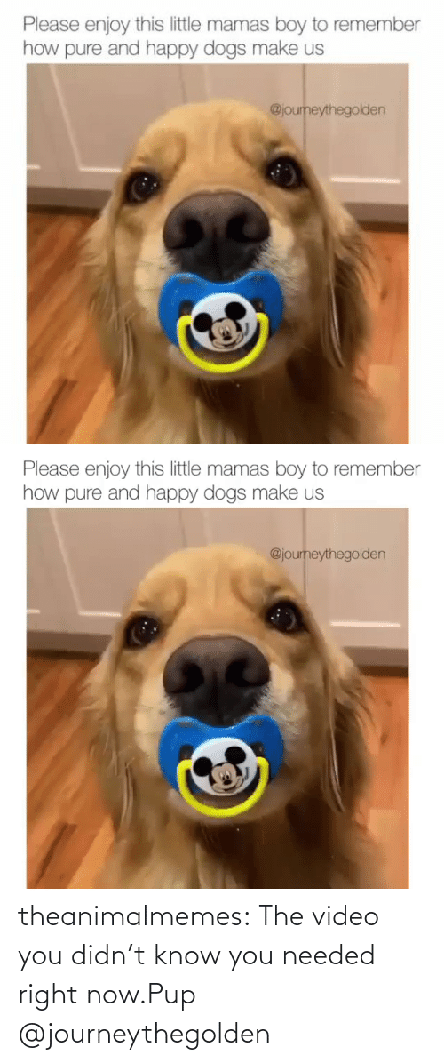 Didnt: theanimalmemes:  The video you didn't know you needed right now.Pup @journeythegolden