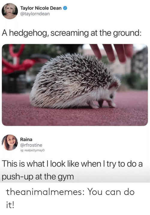 Can Do: theanimalmemes:  You can do it!