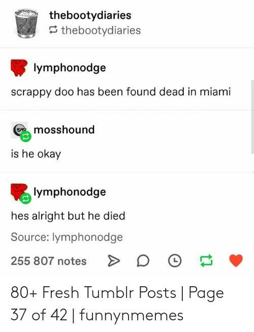 He Died: thebootydiaries  thebootydiaries  lymphonodge  scrappy doo has been found dead in miami  mosshound  is he okay  lymphonodge  hes alright but he died  Source: lymphonodge  255 807 notes 80+ Fresh Tumblr Posts | Page 37 of 42 | funnynmemes