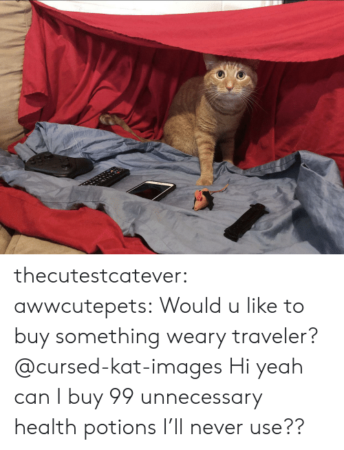 Tumblr, Yeah, and Blog: thecutestcatever:  awwcutepets:  Would u like to buy something weary traveler?  @cursed-kat-images   Hi yeah can I buy 99 unnecessary health potions I'll never use??
