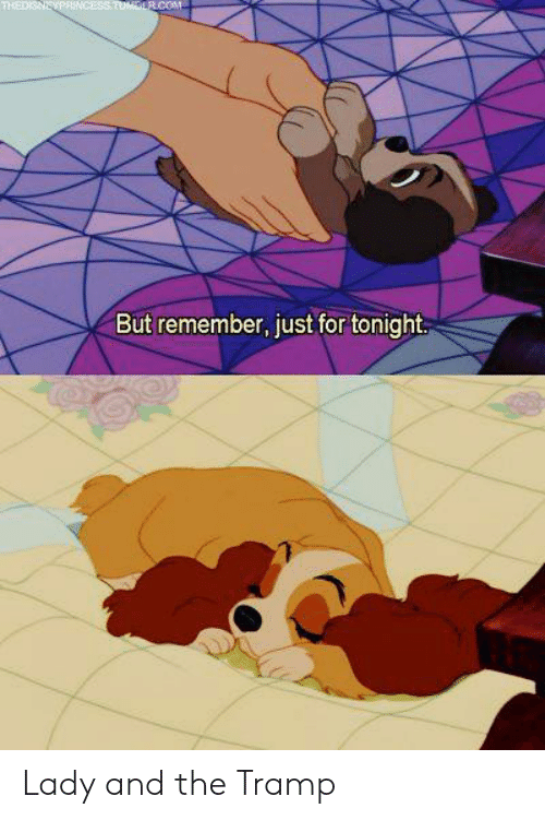 Memes, Lady and the Tramp, and 🤖: THEDISNEVPRINCESSTUMGLR.COM  But remember, just for tonight Lady and the Tramp