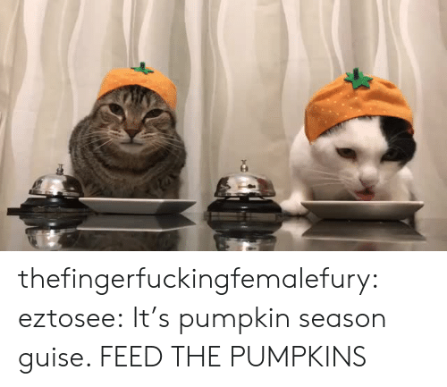 Target, Tumblr, and Blog: thefingerfuckingfemalefury: eztosee: It's pumpkin season guise.  FEED THE PUMPKINS