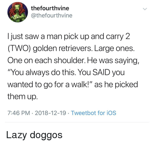 """Lazy, Saw, and Ios: thefourthvine  @thefourthvine  I just saw a man pick up and carry 2  IWO) golden retrievers. Large ones  One on each shoulder. He was saying,  """"You always do this. You SAID you  wanted to go for a walk!"""" as he picked  them up  7:46 PM 2018-12-19 Tweetbot for ioS Lazy doggos"""