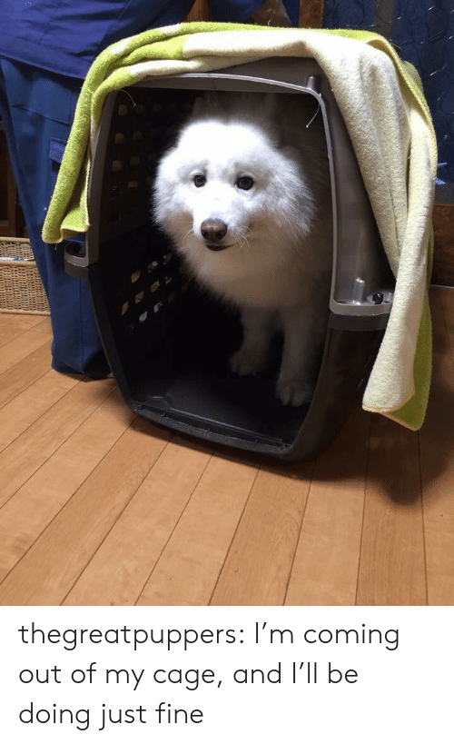 My Cage: thegreatpuppers:  I'm coming out of my cage, and I'll be doing just fine