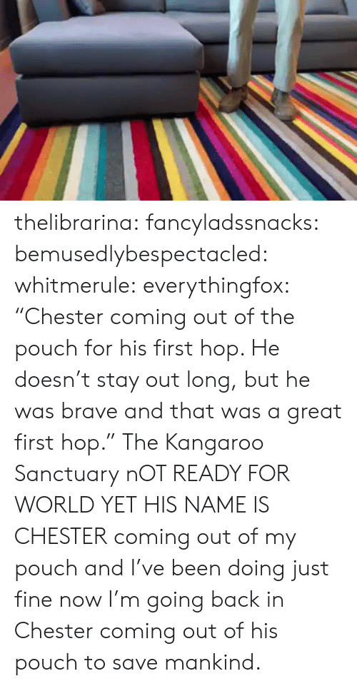 """Instagram, Target, and Tumblr: thelibrarina: fancyladssnacks:  bemusedlybespectacled:  whitmerule:  everythingfox:  """"Chester coming out of the pouch for his first hop. He doesn't stay out long, but he was brave and that was a great first hop.""""   The Kangaroo Sanctuary  nOT READY FOR WORLD YET  HIS NAME IS CHESTER   coming out of my pouch and I've been doing just fine  now I'm going back in   Chester coming out of his pouch to save mankind."""
