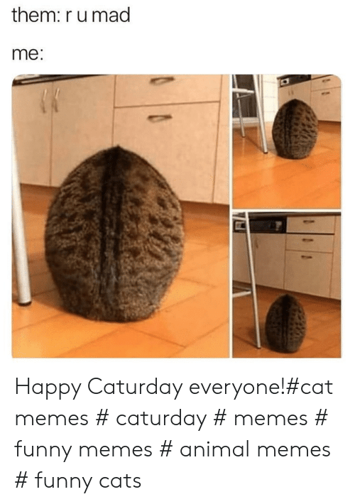 Caturday: them: r u mad  me Happy Caturday everyone!#cat memes # caturday # memes # funny memes # animal memes # funny cats