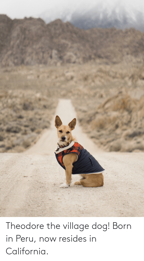 The Village: Theodore the village dog! Born in Peru, now resides in California.