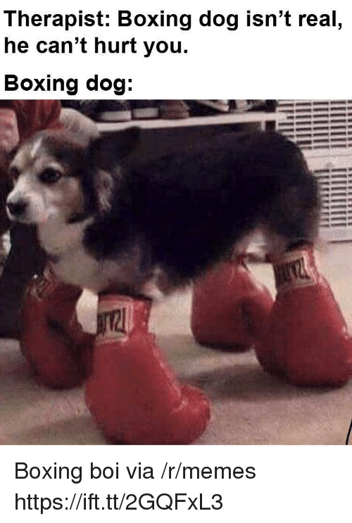 Boxing: Therapist: Boxing dog isn't real  he can't hurt you.  Boxing dog Boxing boi via /r/memes https://ift.tt/2GQFxL3