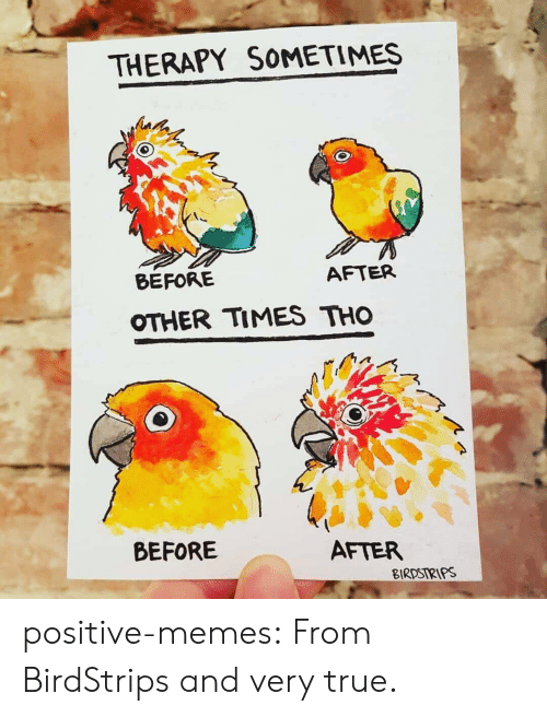 Memes, Target, and True: THERAPY SOMETIMES  BEFORE  AFTER  OTHER TIMES THO  BEFORE  AFTER  BIRDSIRIPS positive-memes: From BirdStrips and very true.