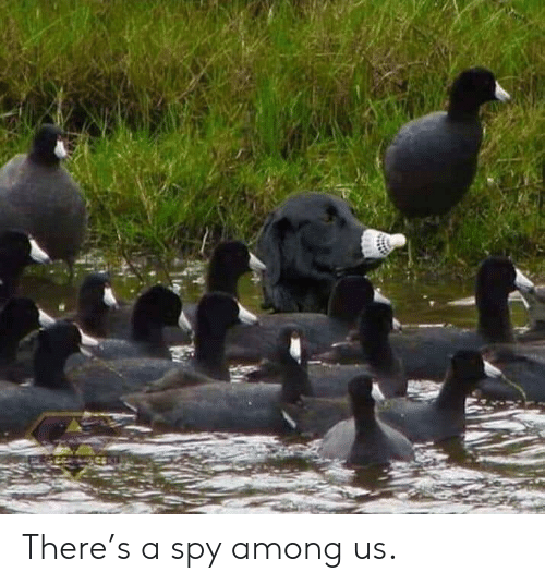 spy: There's a spy among us.