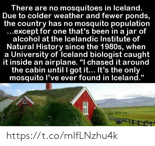 "Airplane, Alcohol, and History: There are no mosquitoes in Iceland.  Due to colder weather and fewer ponds,  the country has no mosquito population  ...except for one that's been in a jar of  alcohol at the Icelandic Institute of  Natural History since the 1980s, when  a University of Iceland biologist caught  it inside an airplane. ""I chased it around  the cabin until I got it... It's the only  mosquito l've ever found in Iceland."" https://t.co/mIfLNzhu4k"