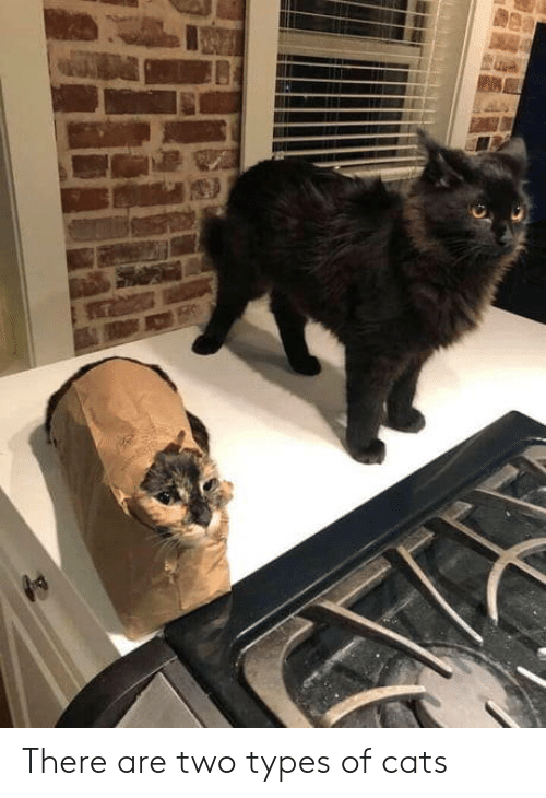 Cats, There, and  Two: There are two types of cats