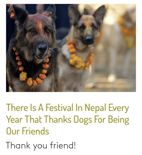 Dogs: There Is A Festival In Nepal Every  Year That Thanks Dogs For Being  Our Friends Thank you friend!