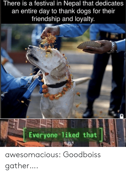Dogs, Tumblr, and Blog: There is a festival in Nepal that dedicates  an entire day to thank dogs for their  friendship and loyalty.  HELIONLAW  TEKS  Everyone liked that awesomacious:  Goodboiss gather….