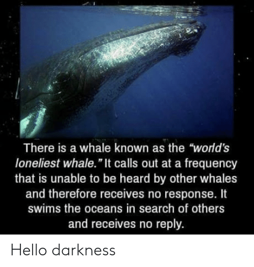 """In Search Of: There is a whale known as the """"world's  loneliest whale."""" It calls out at a frequency  that is unable to be heard by other whales  and therefore receives no response. It  swims the oceans in search of others  and receives no reply. Hello darkness"""