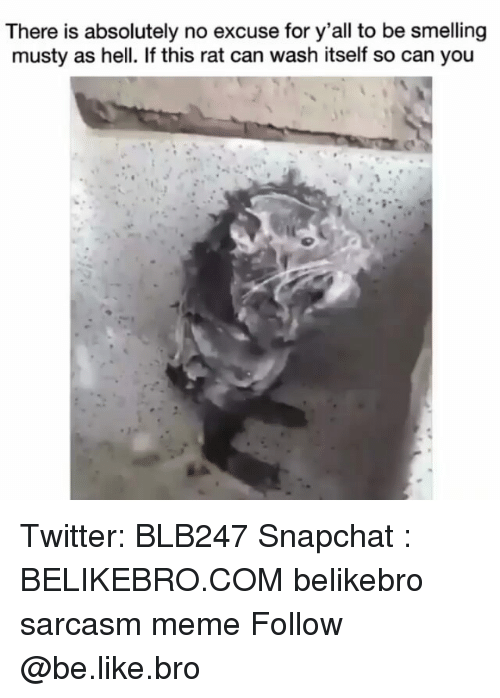 Be Like, Meme, and Memes: There is absolutely no excuse for y'all to be smelling  musty as hell. If this rat can wash itself so can you Twitter: BLB247 Snapchat : BELIKEBRO.COM belikebro sarcasm meme Follow @be.like.bro