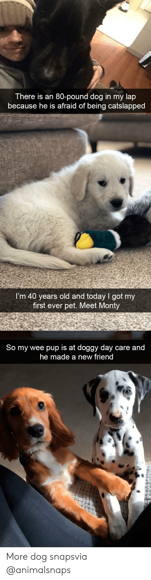 Target, Tumblr, and Wee: There is an 80-pound dog in my lap  because he is afraid of being catslapped   I'm 40 years old and today I got my  first ever pet. Meet Monty   So my wee pup is at doggy day care and  he made a new friend More dog snapsvia @animalsnaps​