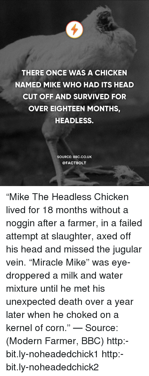 """Head, Memes, and Chicken: THERE ONCE WAS A CHICKEN  NAMED MIKE WHO HAD ITS HEAD  CUT OFF AND SURVIVED FOR  OVER EIGHTEEN MONTHS,  HEADLESS.  SOURCE: BBC.CO.UK  @FACTBOLT """"Mike The Headless Chicken lived for 18 months without a noggin after a farmer, in a failed attempt at slaughter, axed off his head and missed the jugular vein. """"Miracle Mike"""" was eye-droppered a milk and water mixture until he met his unexpected death over a year later when he choked on a kernel of corn."""" — Source: (Modern Farmer, BBC) http:-bit.ly-noheadedchick1 http:-bit.ly-noheadedchick2"""