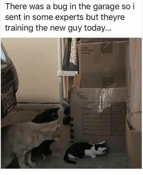 Memes, Today, and 🤖: There was a bug in the garage so i  sent in some experts but theyre  training the new guy today...