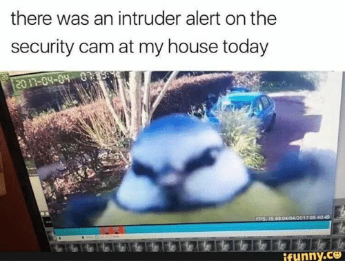 Memes, My House, and House: there was an intruder alert on the  security cam at my house today  ifunny.ce