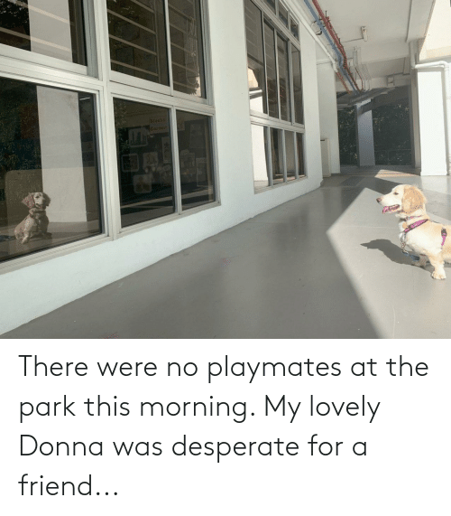 playmates: There were no playmates at the park this morning. My lovely Donna was desperate for a friend...