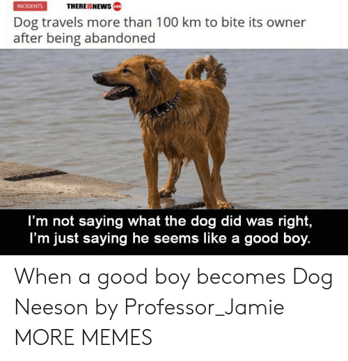 Dank, Memes, and Target: THEREISNEWws  INCIDENTS  Dog travels more than 100 km to bite its owner  after being abandoned  I'm not saying what the dog did was right,  I'm just saying he seems like a good boy. When a good boy becomes Dog Neeson by Professor_Jamie MORE MEMES